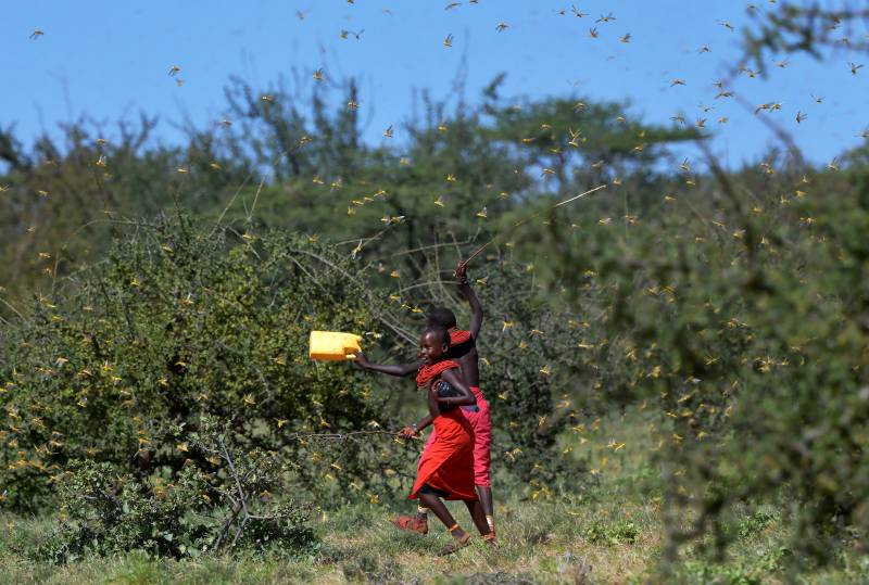 UN warns 'ravenous' locusts threatening East Africa