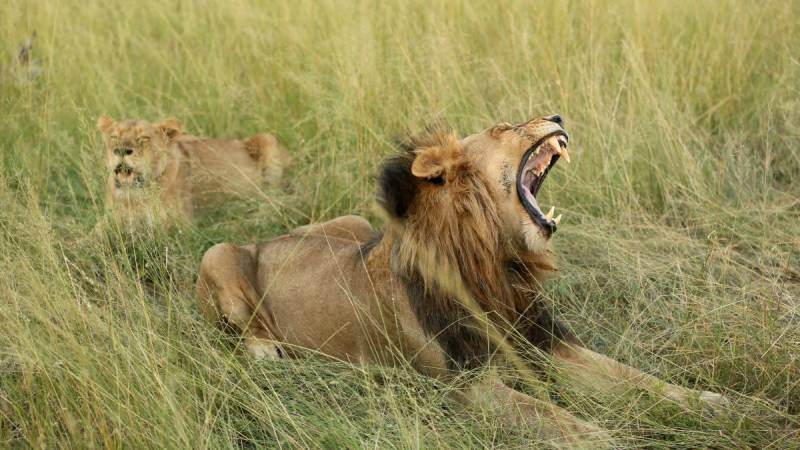 Lions kill female worker in South African game reserve