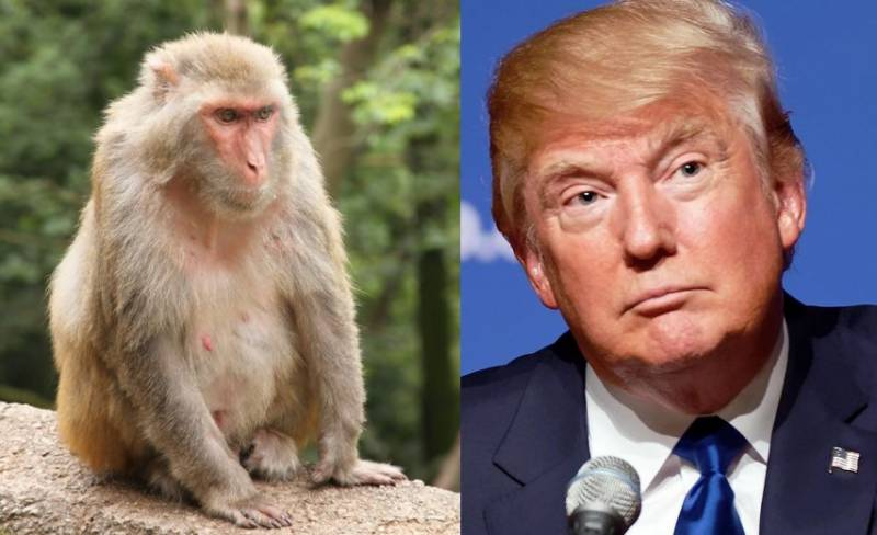 45 monkeys 'arrested' ahead of Trump's visit to India