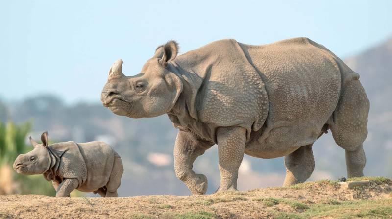 Five rhinos die from suspected anthrax infection in India