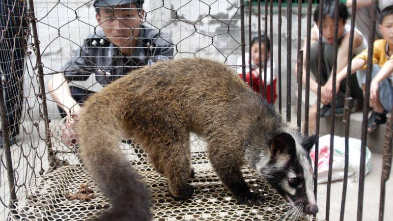 China considers 'complete ban' on wildlife trade
