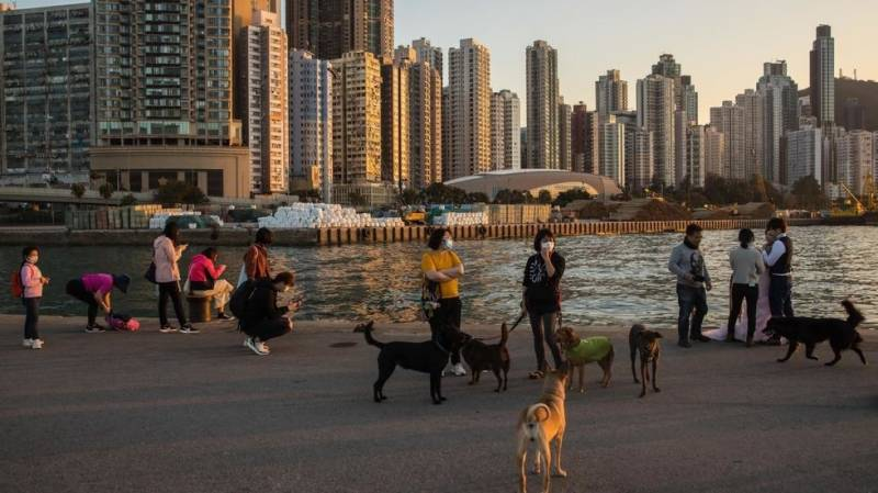 Pet dog quarantined in Hong Kong with low levels of coronavirus