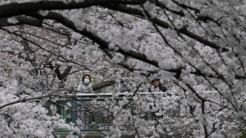 Tokyo asks no cherry blossom party over virus fears