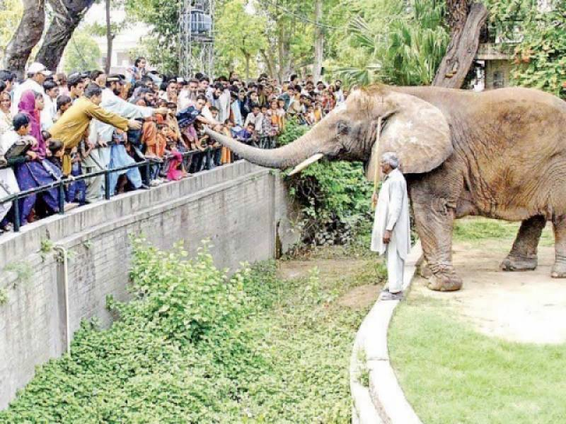 All zoos, wildlife parks in Punjab closed for 3 weeks