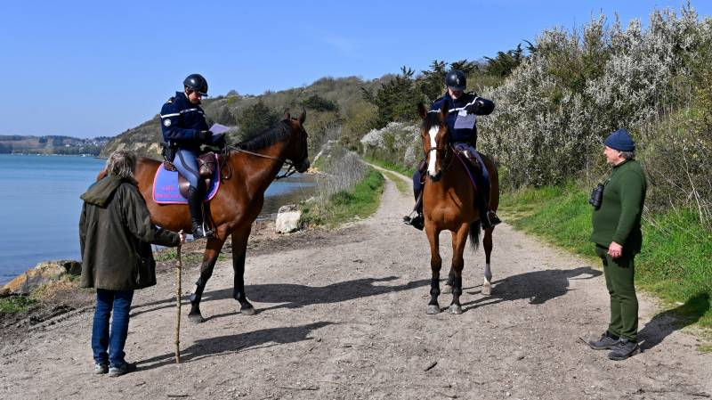 'A stranger stroked my horse' - French police inundated with oddball virus queries