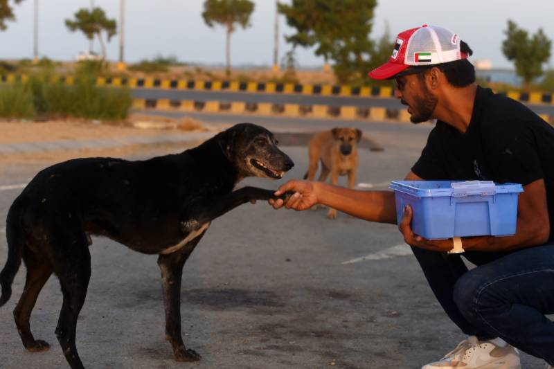 Hundreds of abandoned animals die at Pakistan pet markets