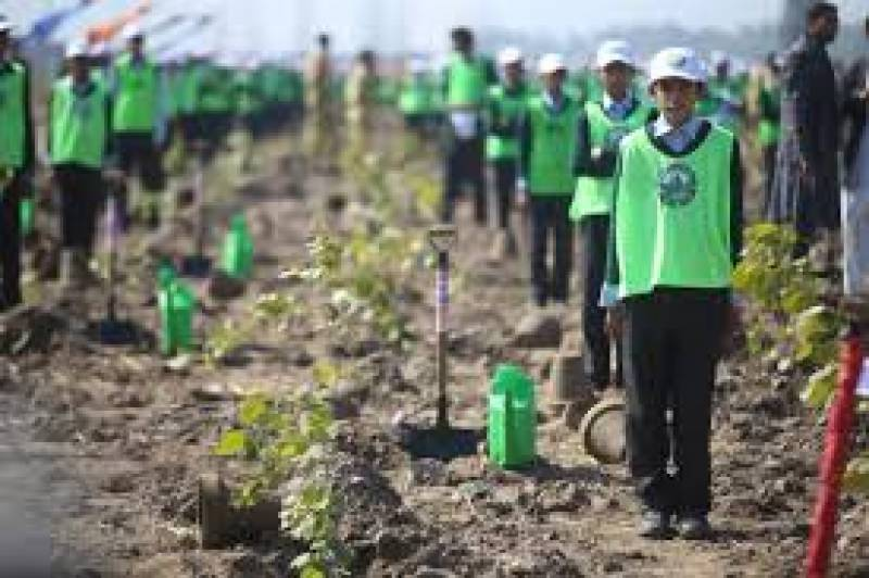 10 billion Tree Tsunami project restored with PM's approval: Amin Aslam