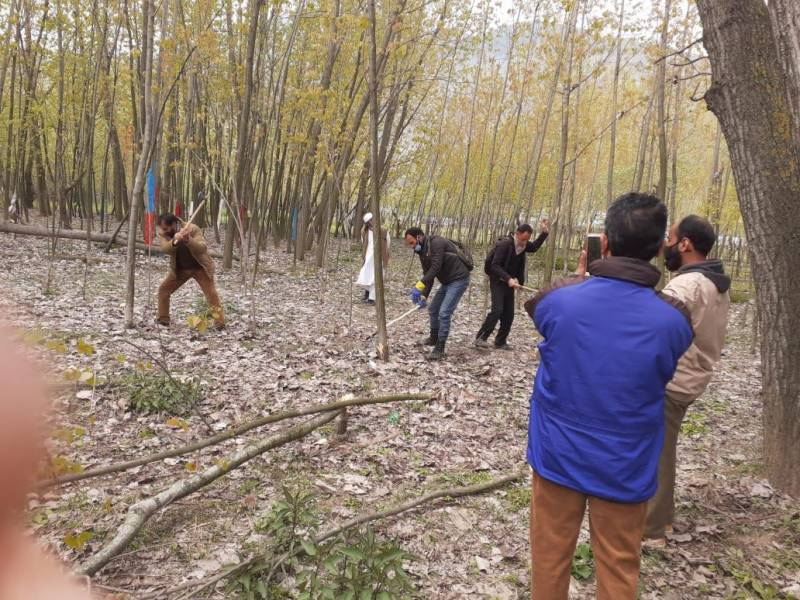 India axing 42,000 poplar trees in Occupied Kashmir to fight Covid-19