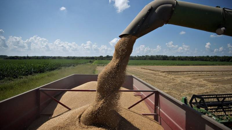 ECC approves 0.2m tons of wheat for utility stores