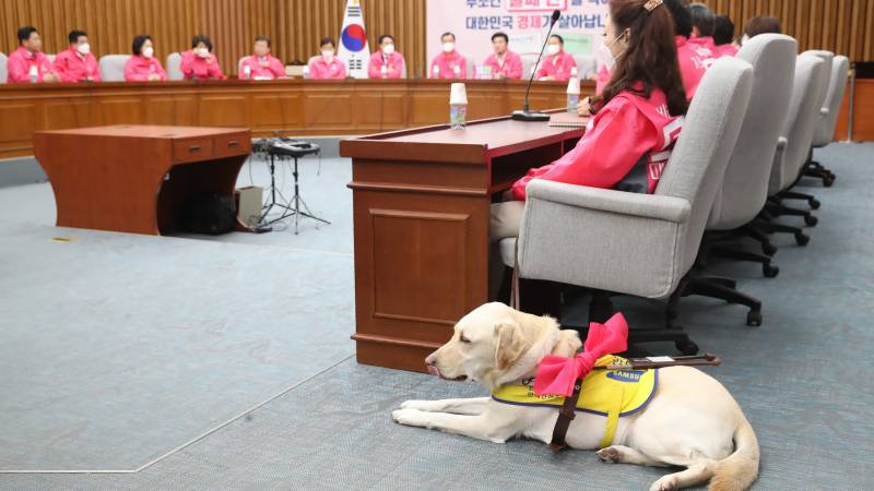 South Korea assembly likely to allow entry to guide dogs