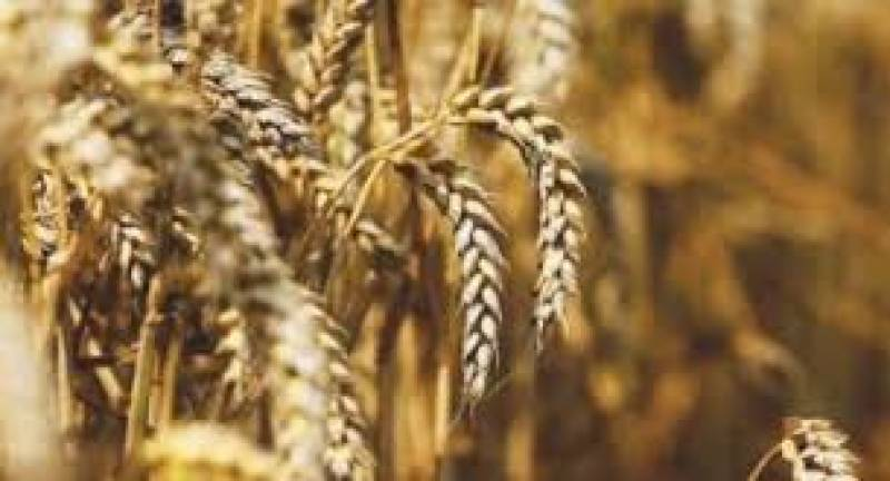 Price hike feared as Punjab suspends wheat supply to flourmills