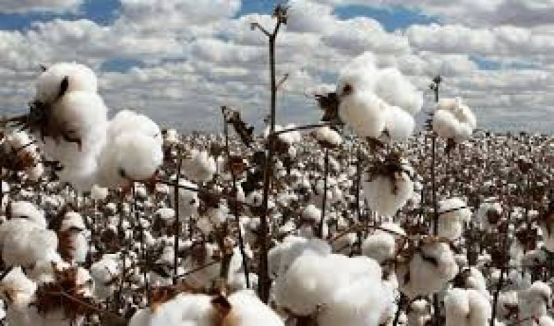 ECC seems confused on cotton support price: FPCCI