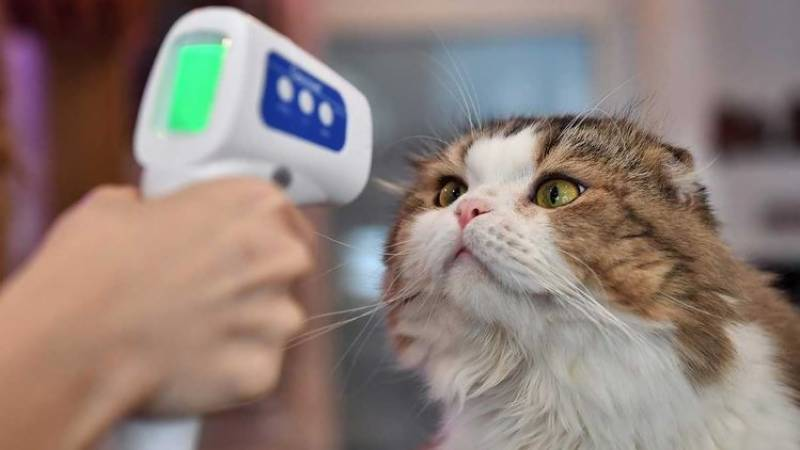 Three cats, dog infected with coronavirus in Netherlands