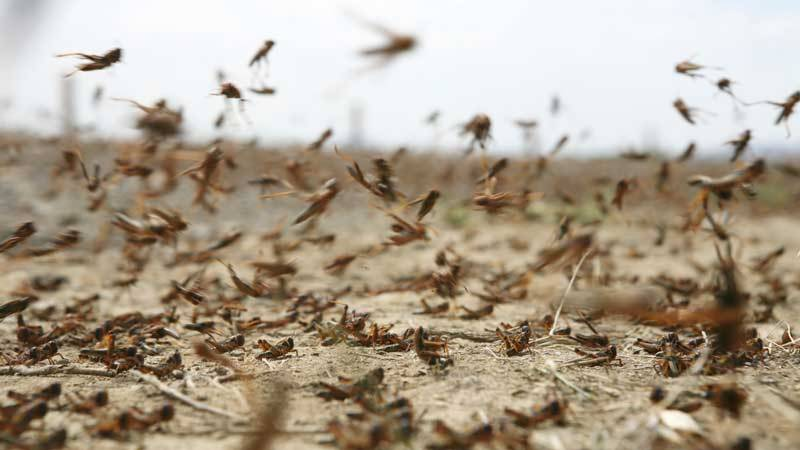NDMA sends medical items, sprayers to provinces for killing locusts