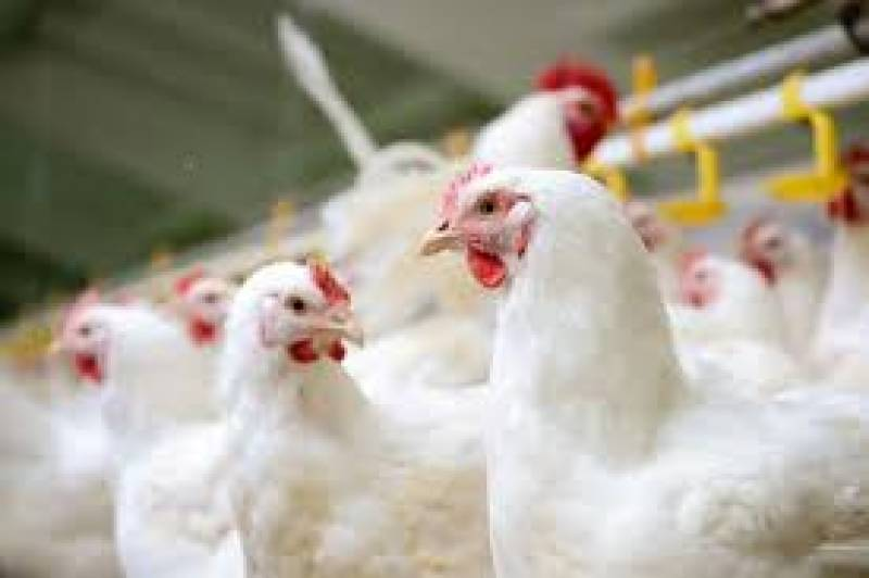 Chicken prices increase in second half of Ramazan