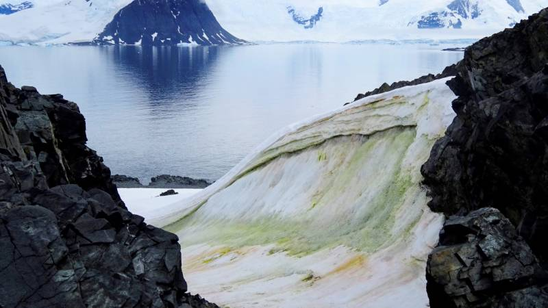 Climate change is turning Antarctica green, study finds