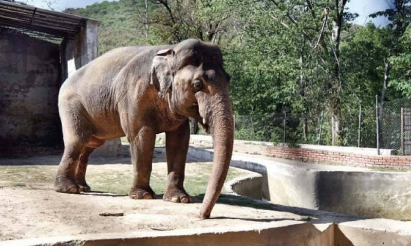 Elephant wins case in Islamabad High Court