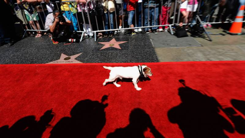 Uggie the star of 'The Artist' wins greatest movie mutt award