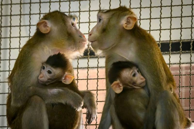 Thailand enters global vaccine race with trials on monkeys