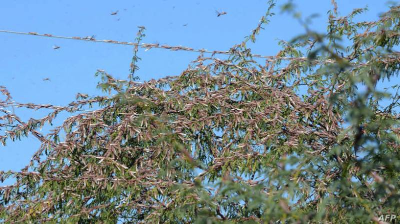 Pakistan says India wants to team up in fighting locusts