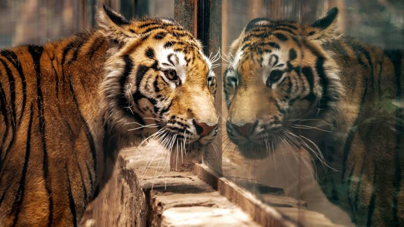Mexican zoo saves animals endangered by virus crisis