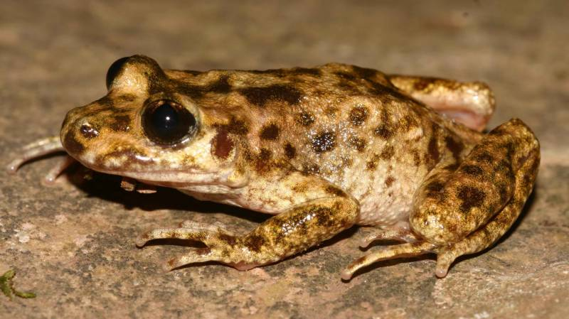 Fossil of 2 million year old frog found in Argentina