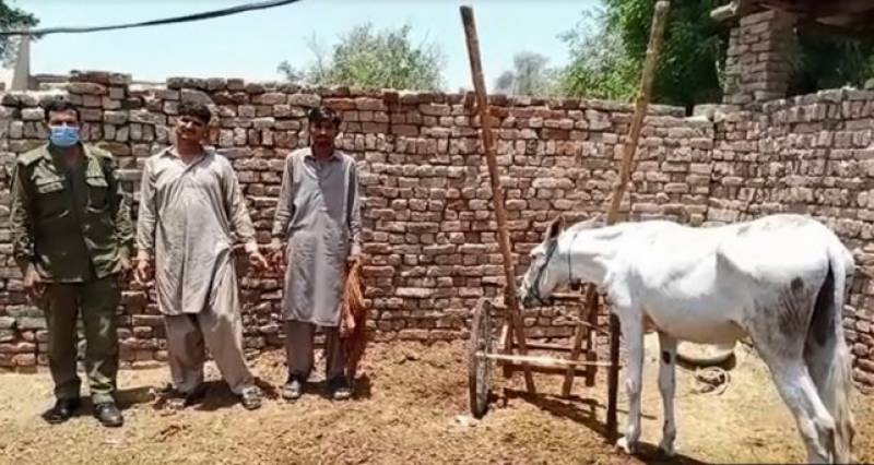 Donkey freed after RY Khan police swoop on gambling race