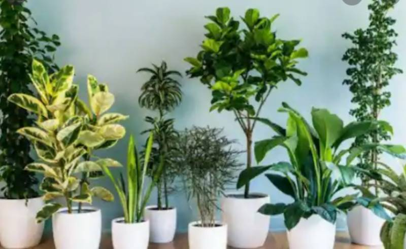 Plants can camouflage odours to avoid being eaten: Study