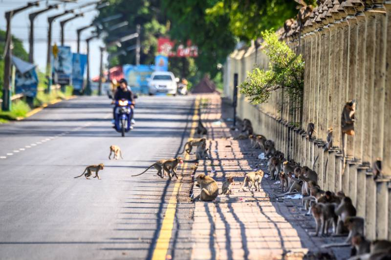 Humans try to take back Thai city from monkeys