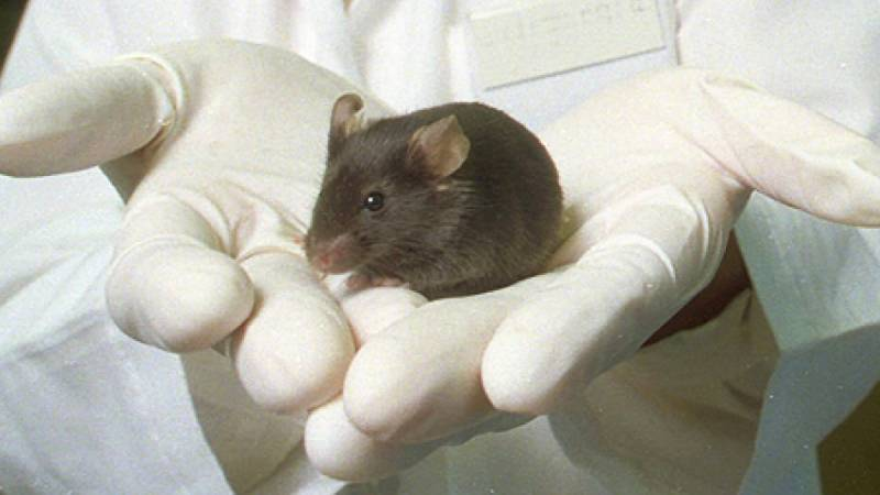 Mice brain breakthrough offers hope for Parkinson's patients
