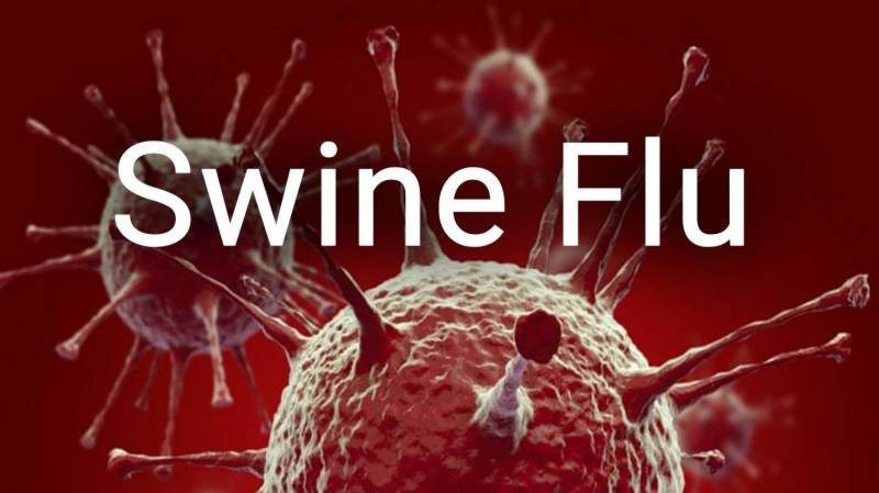 New swine flu found in China has pandemic potential