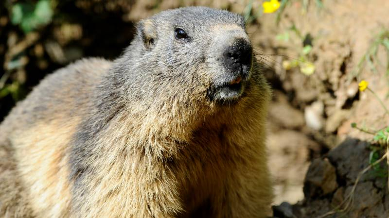 Russian region near Mongolia testing rodents for plague