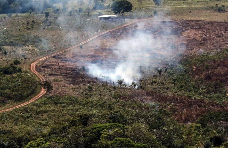 Colombia lost forest area the size of Sao Paulo in 2019
