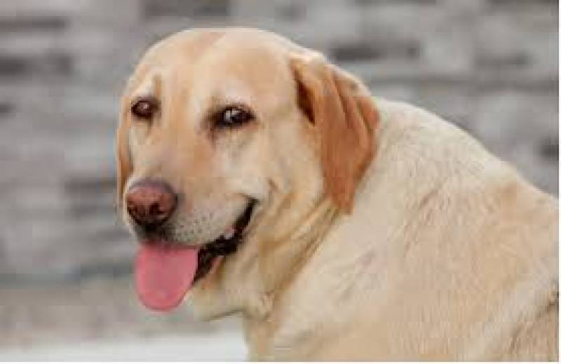 Scientists find new formula for canine age