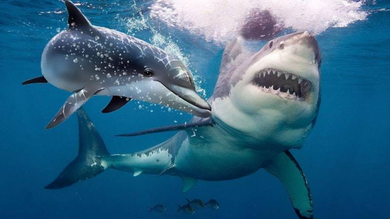 I still love sharks: bloodied woman unbowed after Australia attack