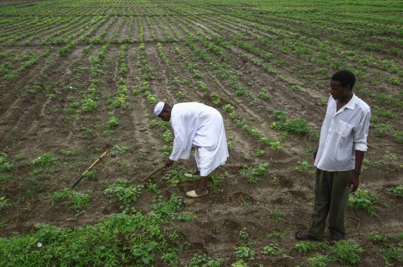Peanut traders baffled by Sudan export ban on key cash crop