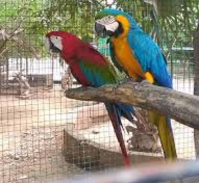 Over 500 birds of Islamabad Zoo go 'missing'