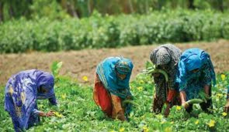 Provinces urged to increase women share in raising plant nurseries
