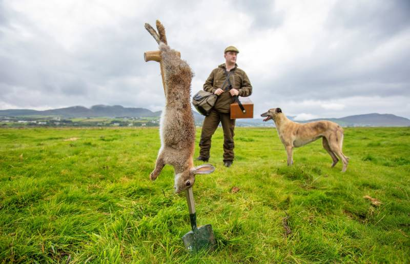 Hunting with Ireland's last rabbit catcher