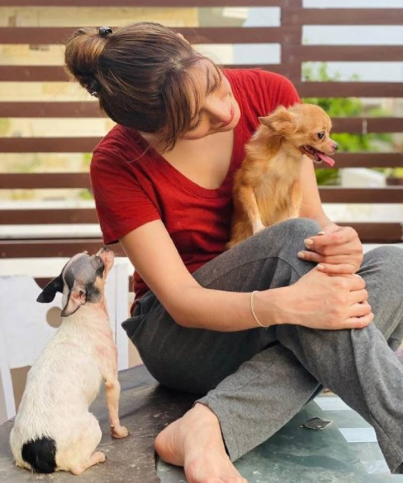 Mehwish Hayat shares an adorable picture with her pet dogs