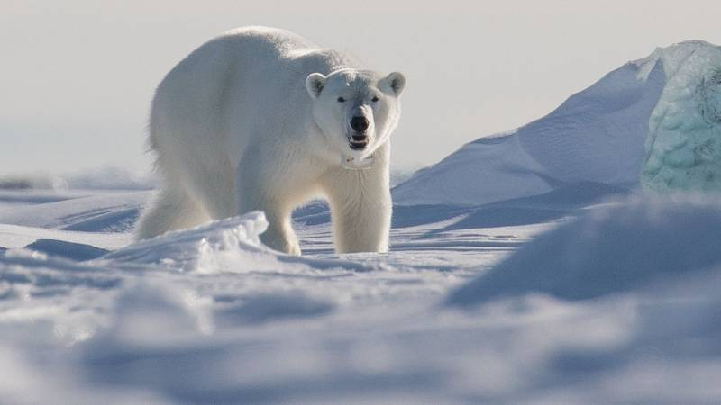 Polar bear kills man in Arctic Svalbard