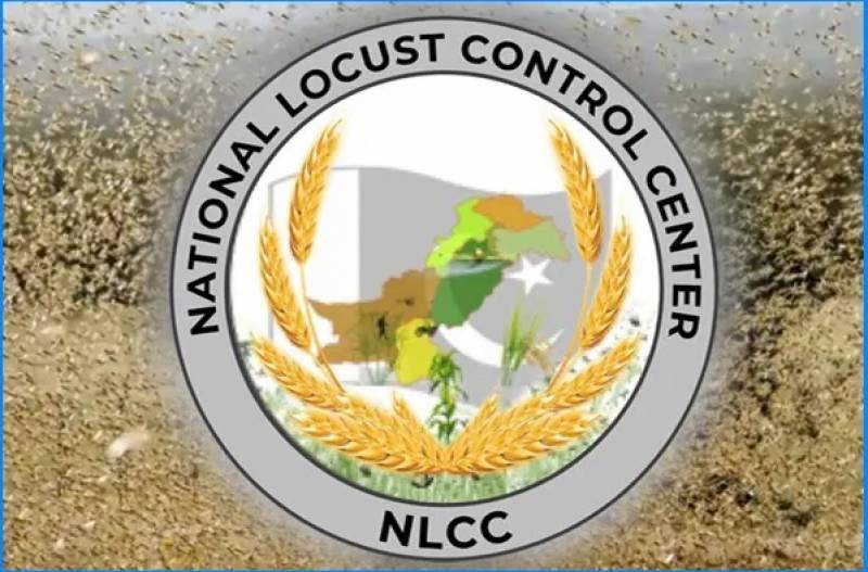 No locust found in Punjab and KP, says NLCC