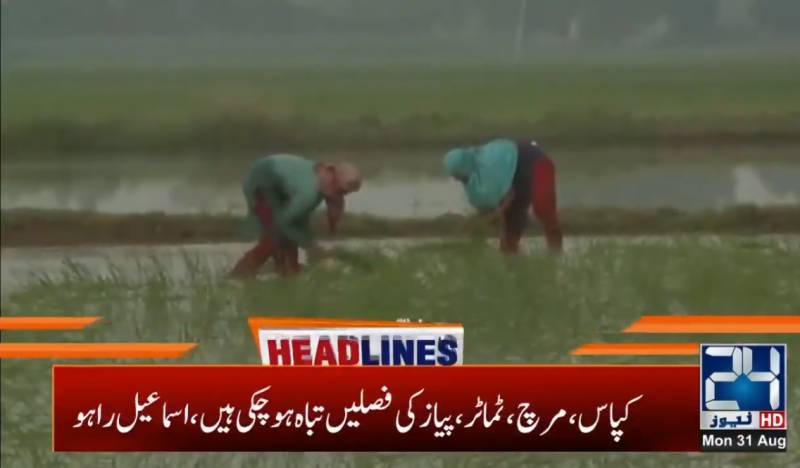 Sindh asks Centre to waive loan, tax for rain-hit farmers