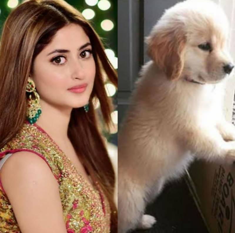 Sajal Aly's picture with her pet wins hearts of fans
