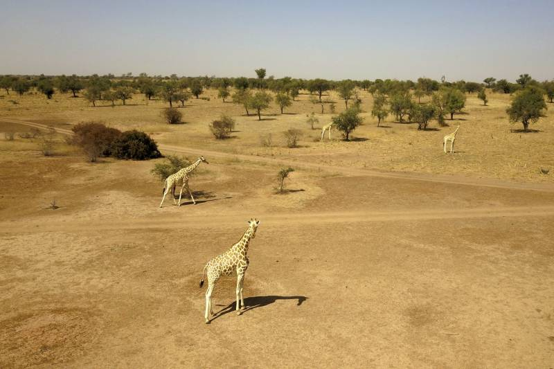 World wildlife plummets more than two-thirds in 50 years