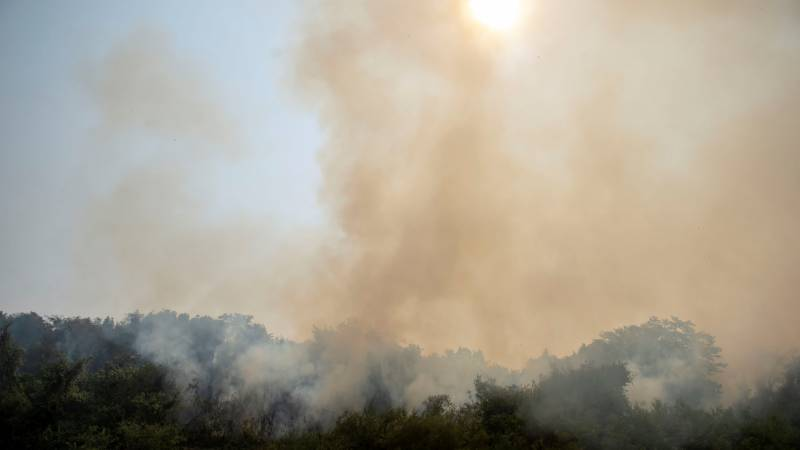 As Brazil's wetlands burn, rain is 'only hope'