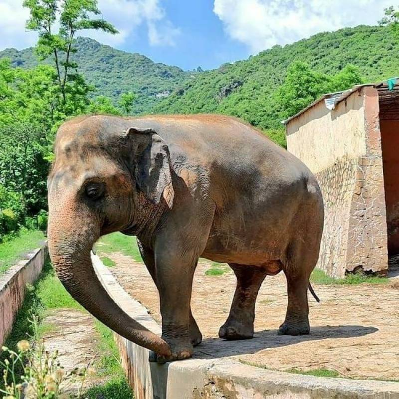 Ministry changes its mind on sending Kaavan elephant to Cambodia