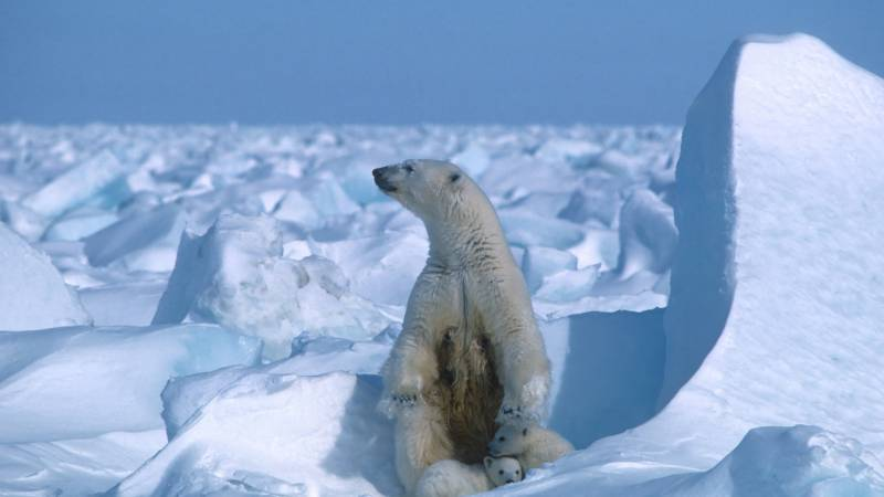 -69.6 Celsius: New Arctic cold record from 1991 found
