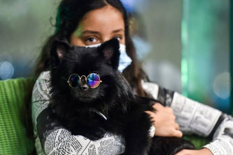 First dog cafe delights pet-lovers in changing Saudi Arabia