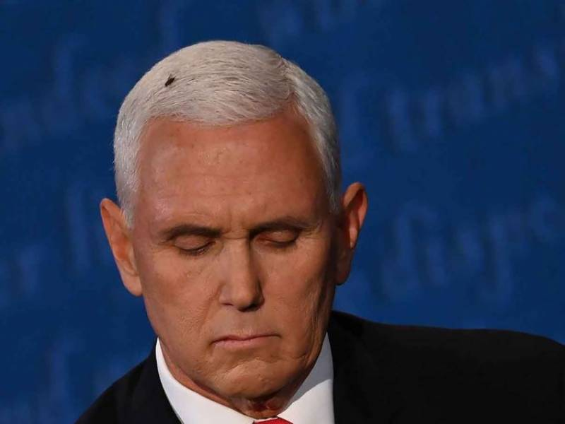 Fly creates buzz at VP debate -- and online